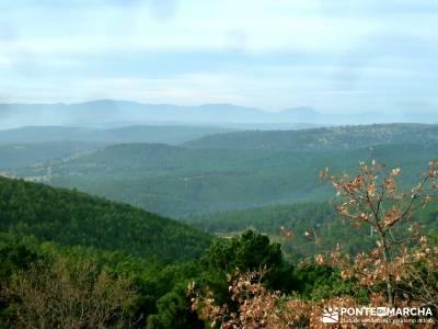 Pinares, Riscos y Atalayas; escapadas alrededor de madrid; excursion desde madrid